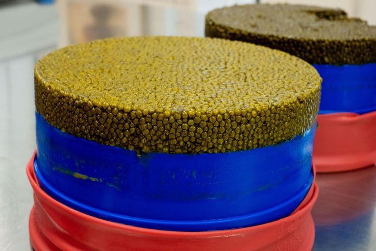 Kaviar kontakte berlin